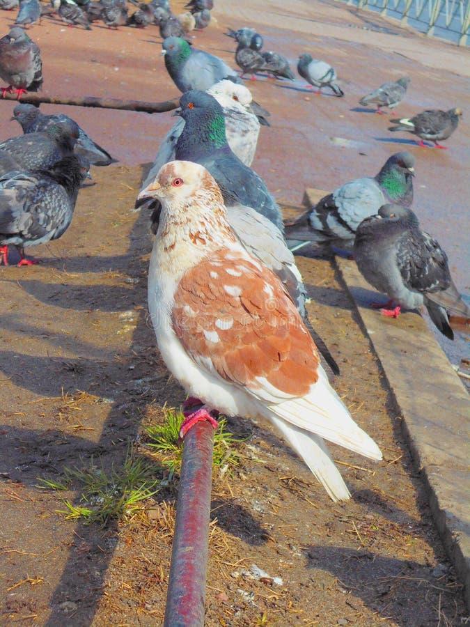 Día de la paloma fotografía de archivo libre de regalías