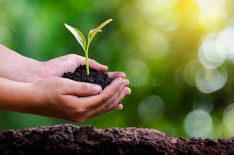 Día de la Tierra del ambiente en las manos de los árboles que crecen almácigos Bokeh pone verde la mano femenina del fondo que so imágenes de archivo libres de regalías