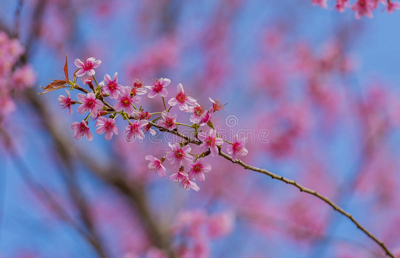 Día de tarjeta del día de San Valentín Flores rosadas florecientes hermosas fotos de archivo libres de regalías