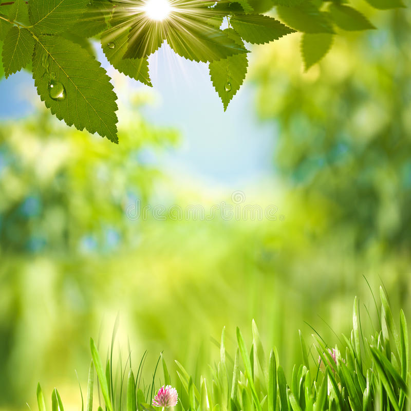 Día de verano de la belleza. fotografía de archivo libre de regalías