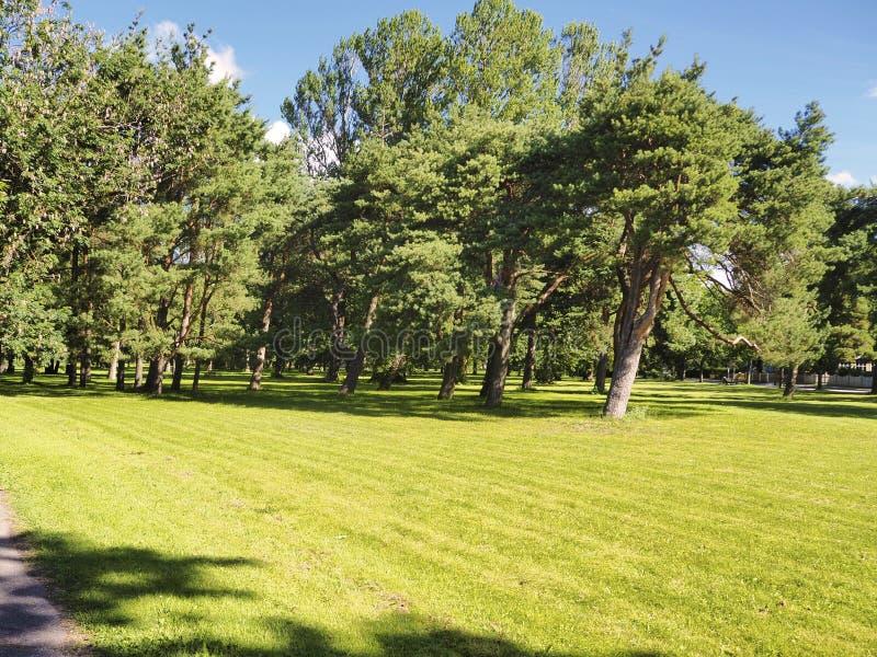 Día de verano en el parque imagen de archivo
