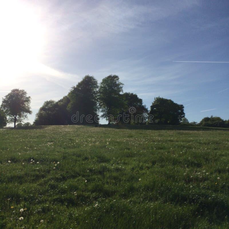Día de verano soleado en parque británico imagen de archivo
