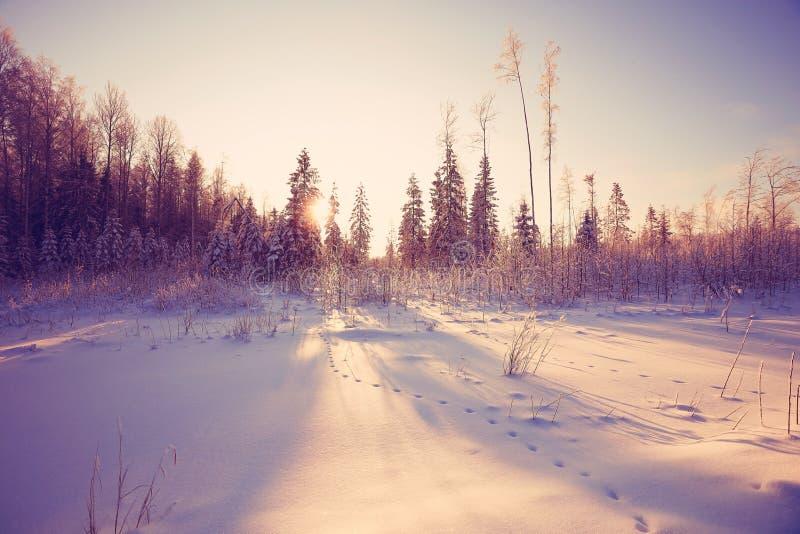 Día del frío del invierno fotografía de archivo libre de regalías