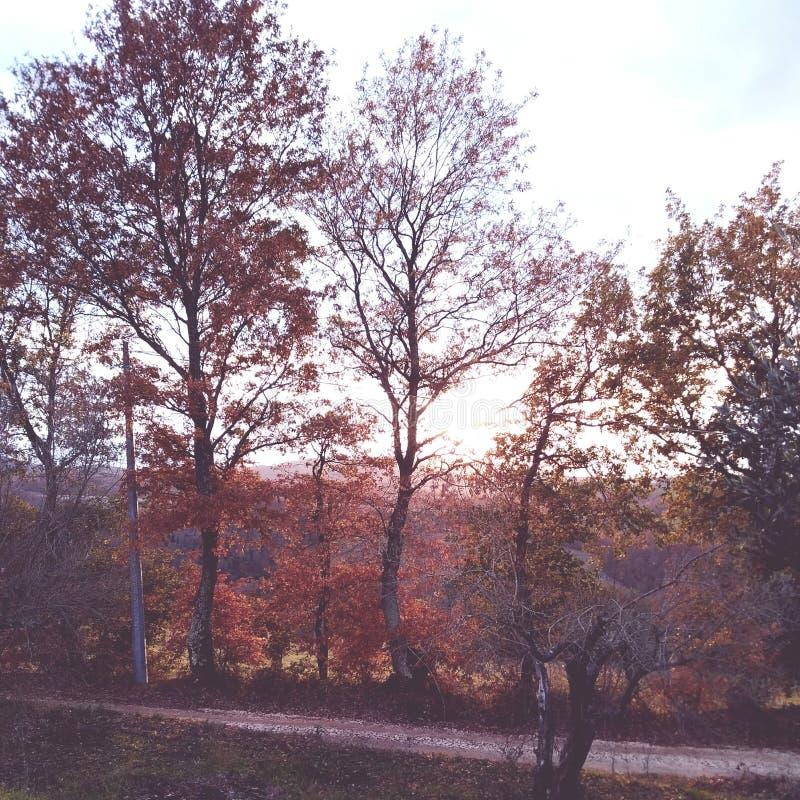Día del otoño fotografía de archivo libre de regalías