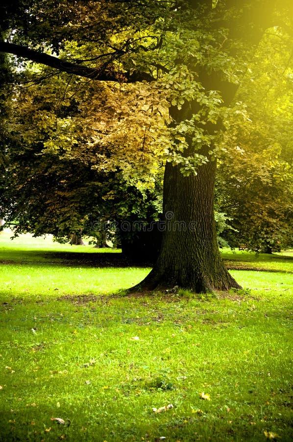 Día del otoño imagen de archivo
