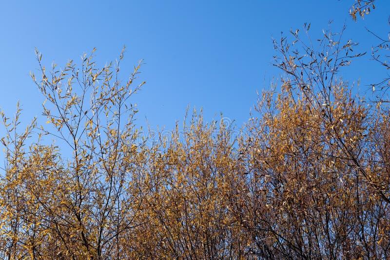 Día del otoño en Arkhangelsk Vista del río Dvina septentrional y puerto fluvial en Arkhangelsk fotografía de archivo libre de regalías