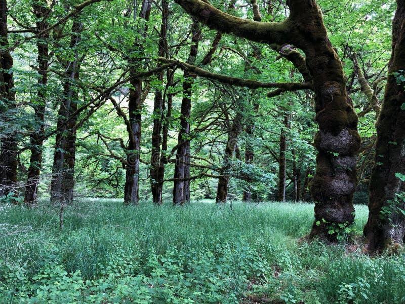 Día hacia fuera en bosque enorme foto de archivo