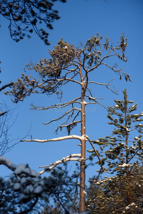 Día helado en el bosque imagen de archivo
