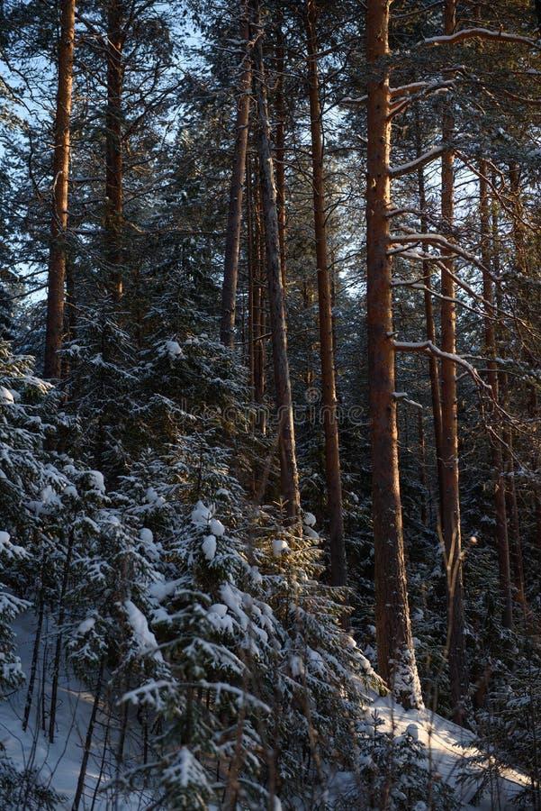 Día helado en el bosque fotos de archivo libres de regalías