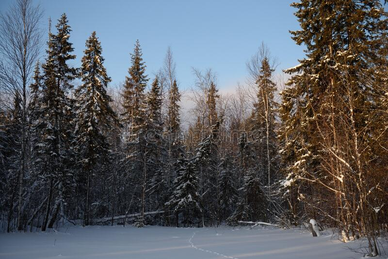Día helado en el bosque imagenes de archivo