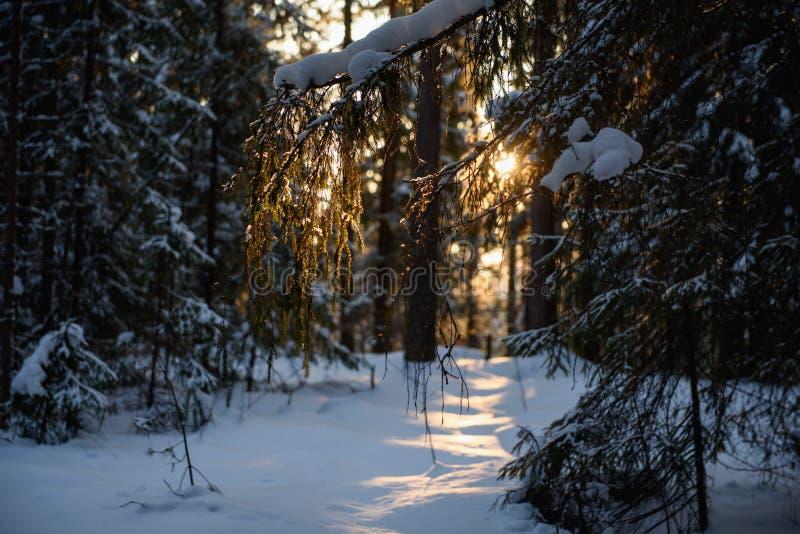 Día helado en el bosque fotografía de archivo libre de regalías
