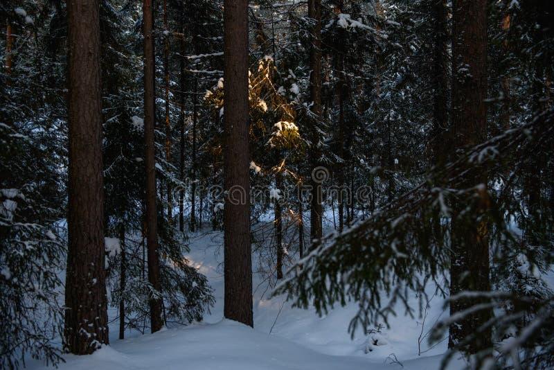 Día helado en el bosque imágenes de archivo libres de regalías