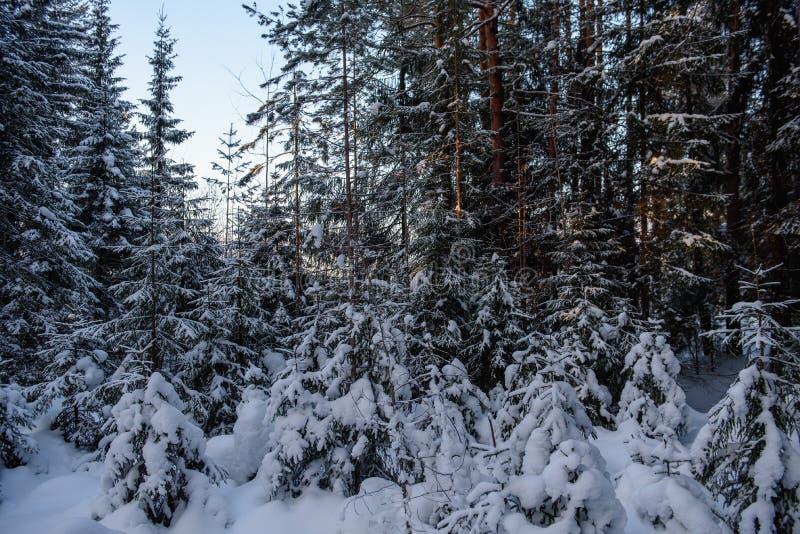 Día helado en el bosque foto de archivo libre de regalías