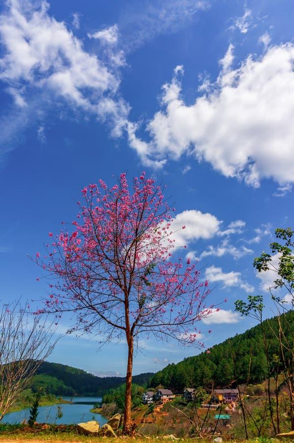 Día hermoso del flor del melocotón entre la naturaleza imagenes de archivo