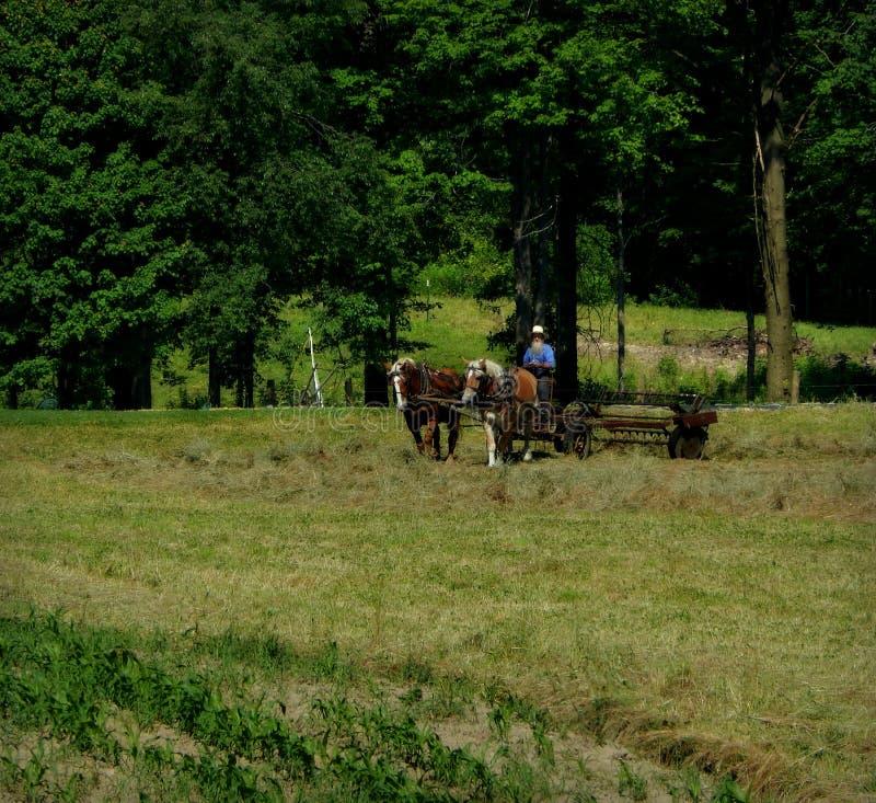 Día laborable de Amish fotografía de archivo libre de regalías