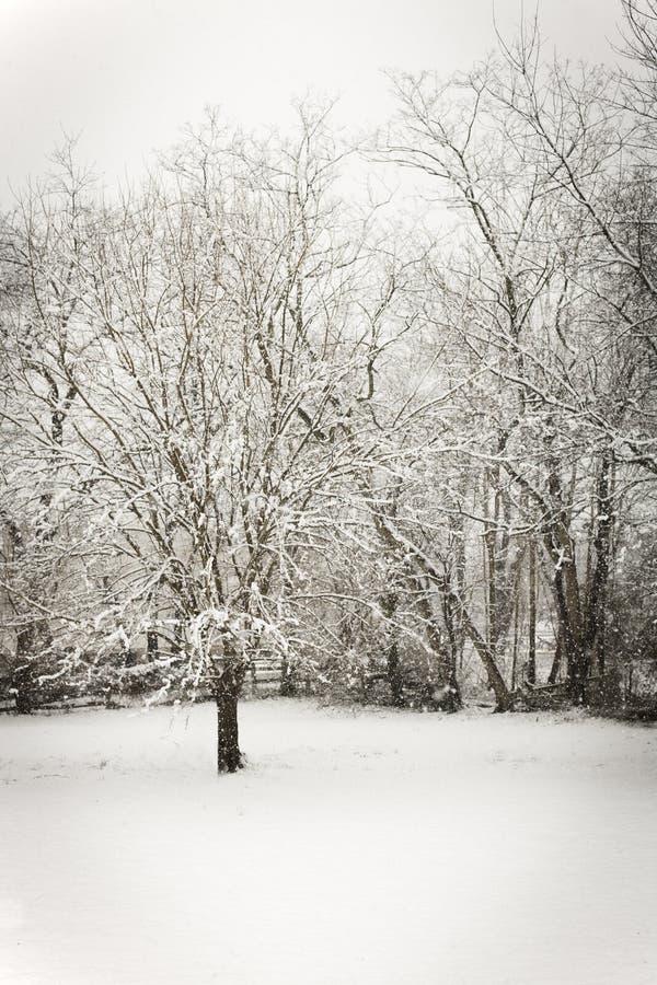 Día Nevado foto de archivo libre de regalías