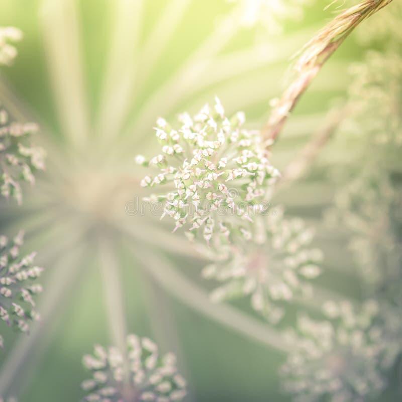Día soleado asombroso en el prado del verano con los wildflowers fotografía de archivo libre de regalías