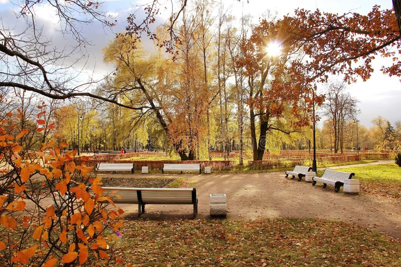Día soleado blanco del banco en parque de la ciudad del otoño foto de archivo