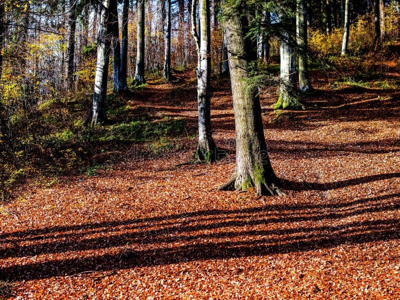 Día soleado del otoño en el bosque fotografía de archivo