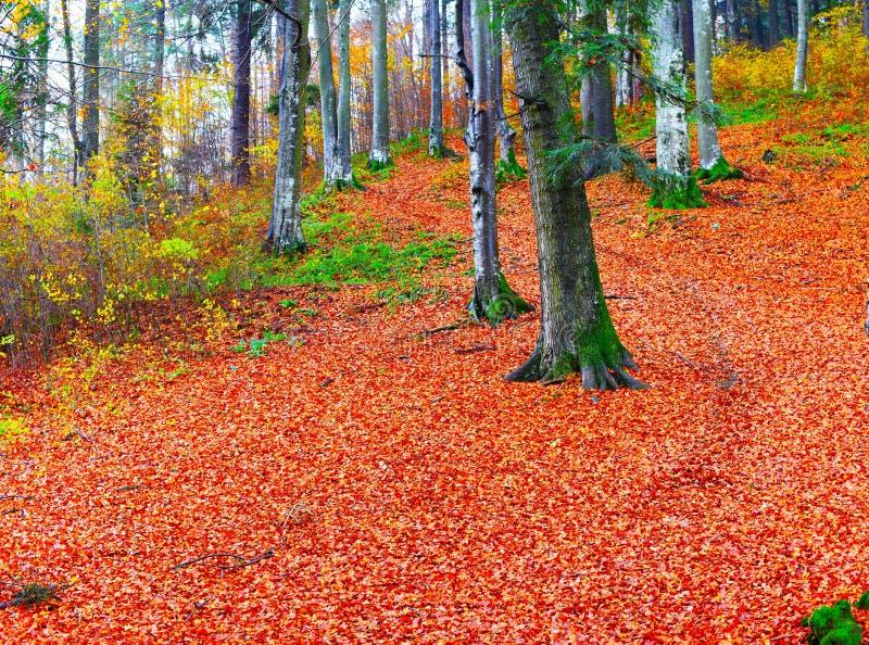 Día soleado del otoño en el bosque foto de archivo libre de regalías