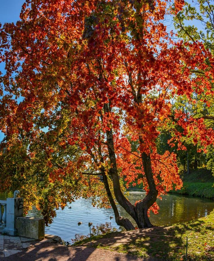 Día soleado del otoño en el parque en Gatchina fotos de archivo