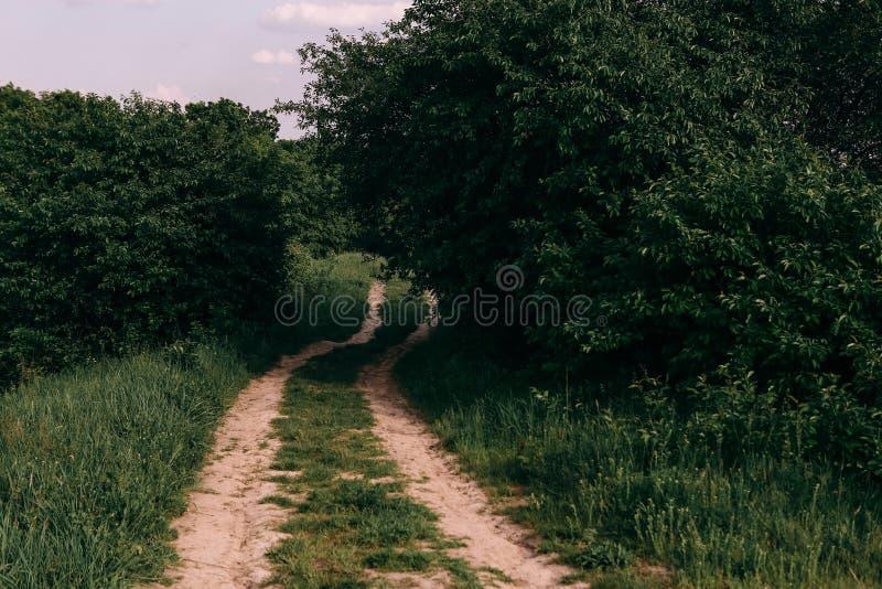 día soleado demasiado grande para su edad campo del camino de tierra de la bobina de la hierba foto de archivo