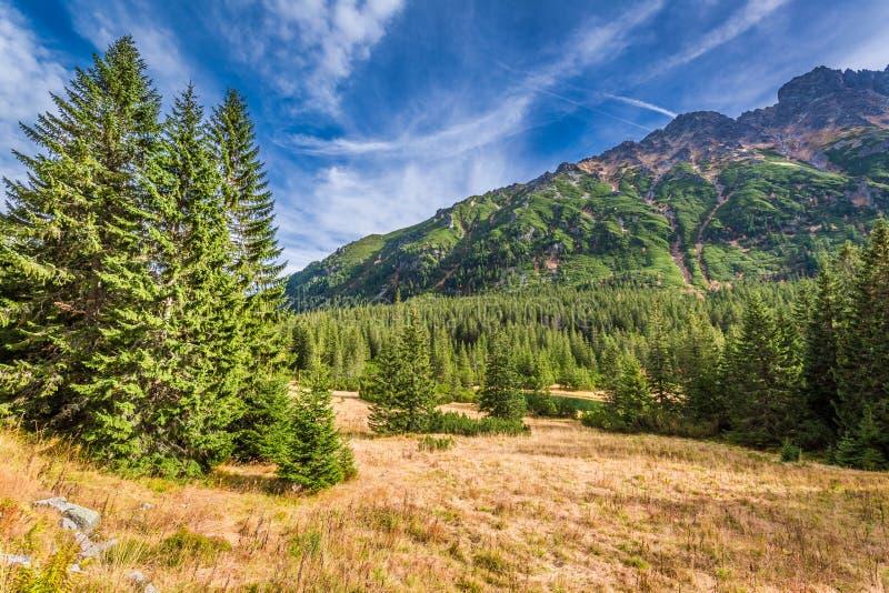 Día soleado en la pequeña charca en las montañas de Tatra imagen de archivo libre de regalías