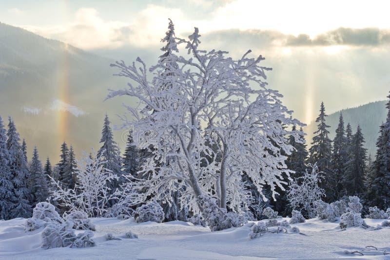 Día soleado en las montañas del invierno imagen de archivo