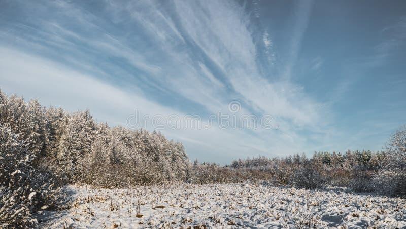 día soleado escarchado en el bosque del invierno/el día escarchado en el invierno f foto de archivo libre de regalías