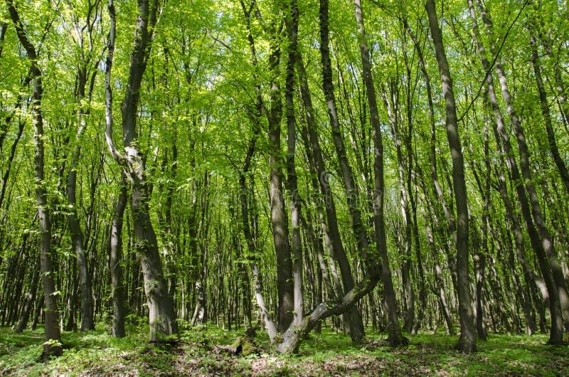 Día soleado hermoso en un bosque verde fotos de archivo