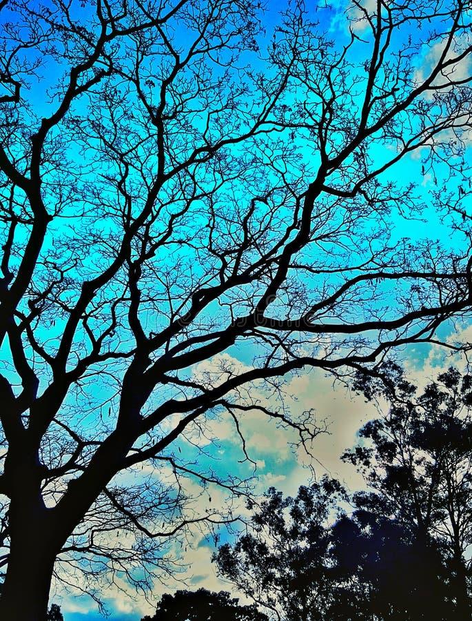 Días azules fotografía de archivo libre de regalías