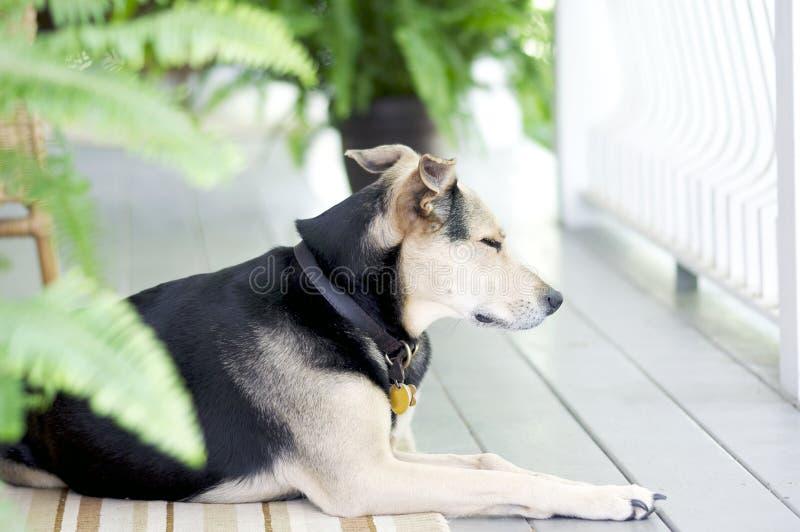 Días de perro de verano imagen de archivo libre de regalías