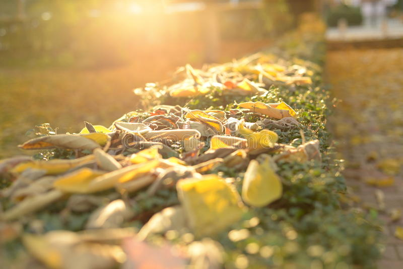 Días del otoño en la acción imagen de archivo