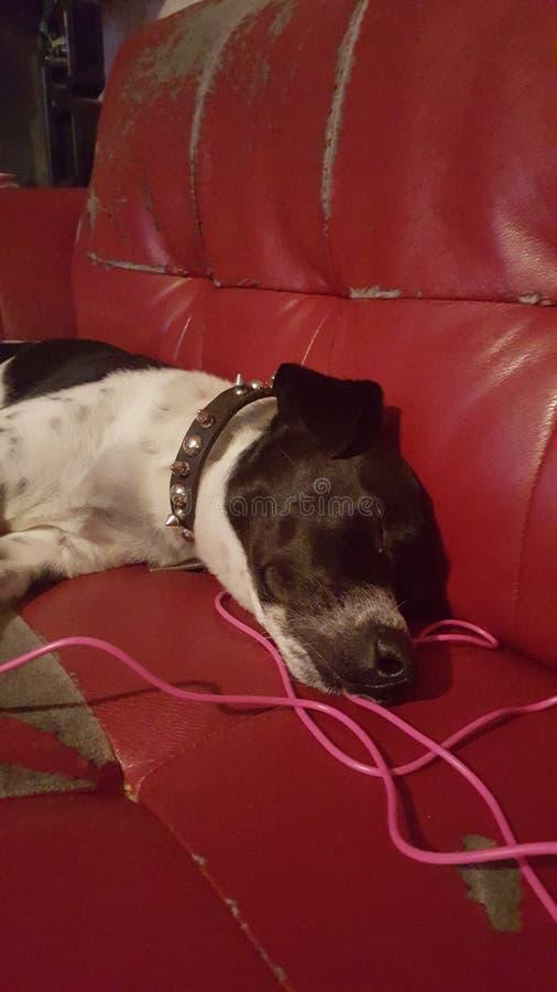 Días del perrito de maniquí imágenes de archivo libres de regalías
