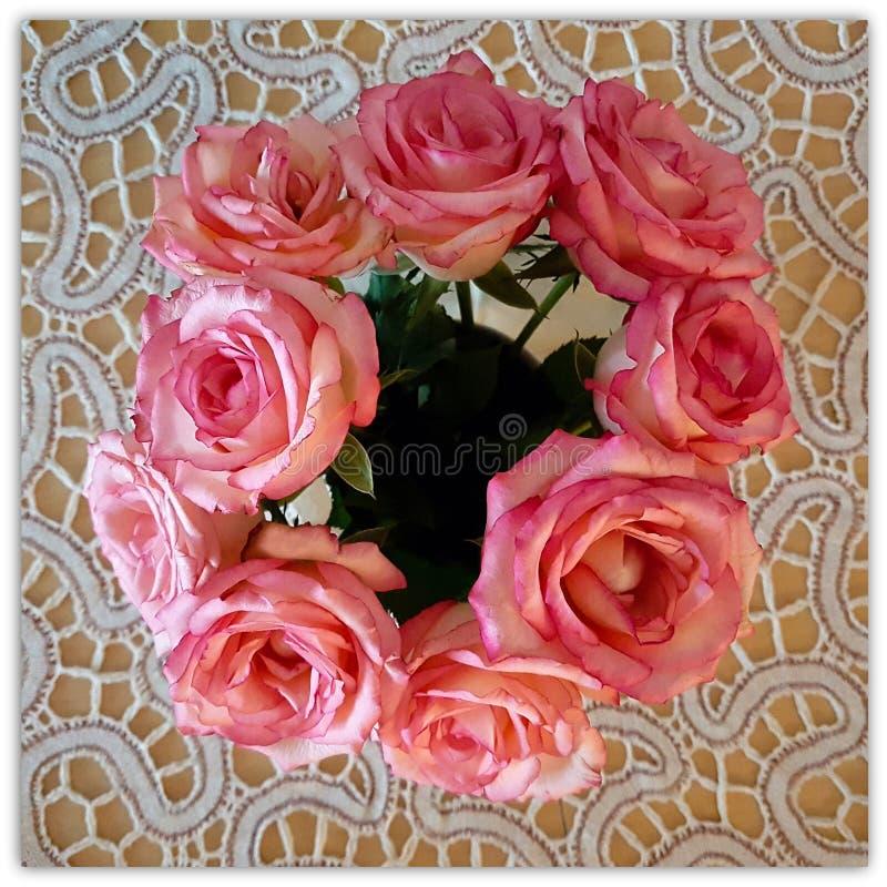 Dígalo a través de la rosa imagen de archivo libre de regalías