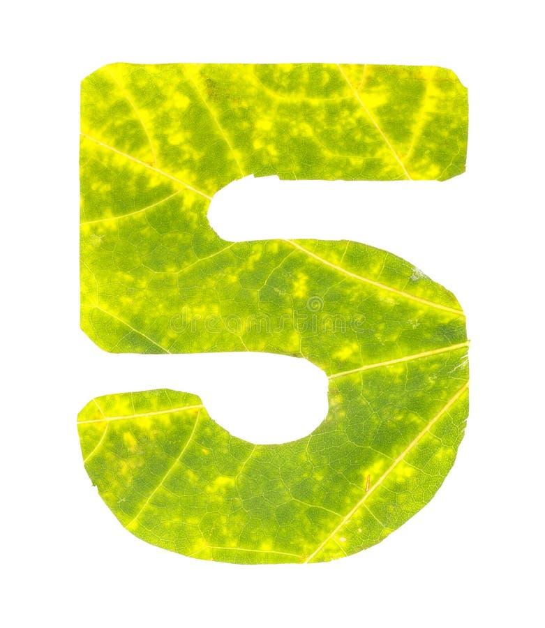 Dígito 5 tallado de las hojas de otoño imagenes de archivo
