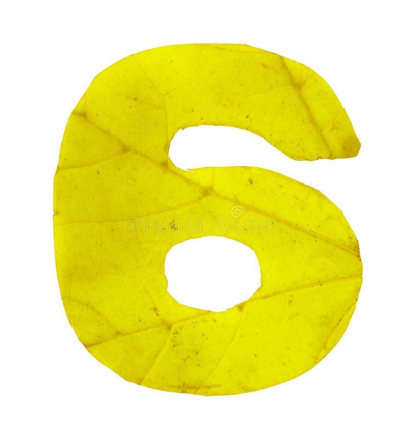 Dígito 6 tallado de las hojas de otoño imagen de archivo