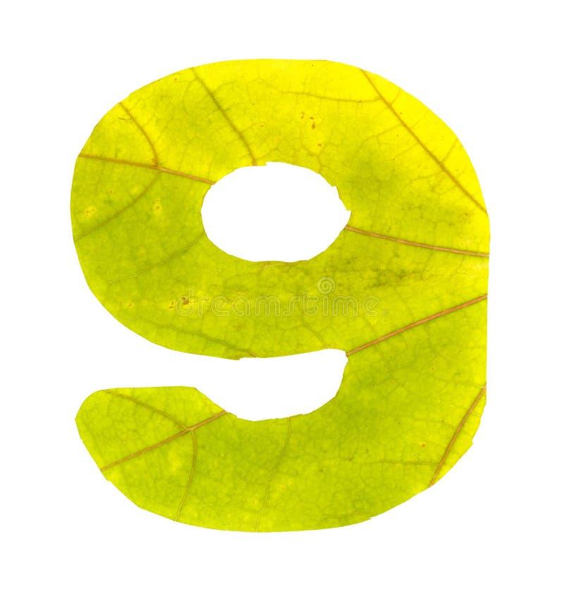 Dígito 9 tallado de las hojas de otoño imagen de archivo