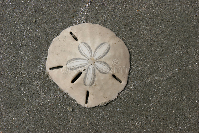 Dólar de areia