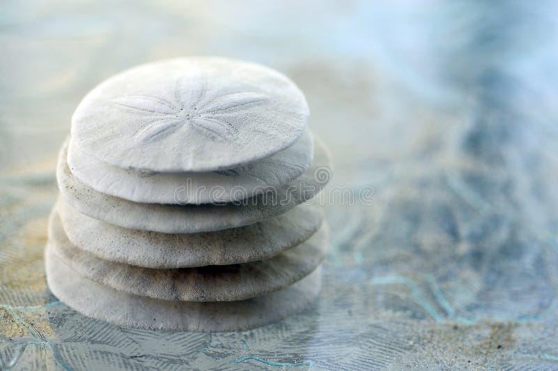 Dólar de arena imagen de archivo