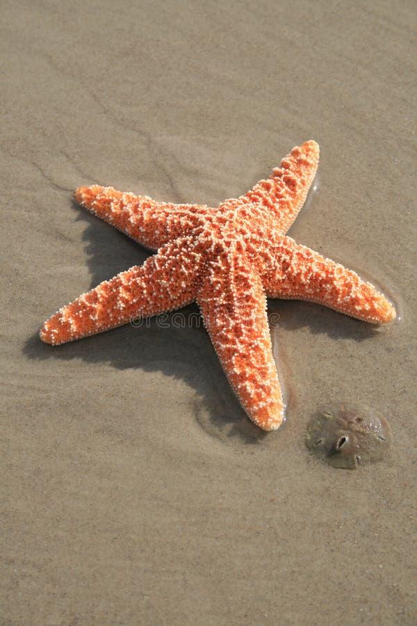 Dólar de las estrellas de mar y de arena foto de archivo