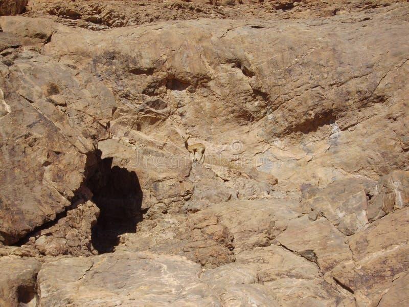 Dólar en rocas imagen de archivo