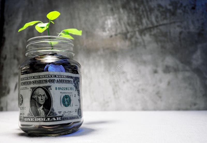 Dólar los billetes de banco en los tarros de cristal allí somos muchos acuñamos y los árboles imagen de archivo libre de regalías