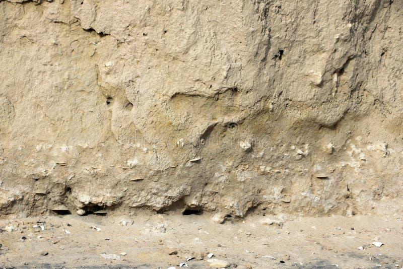 Dólares de areia hirtos de medo encaixados ao longo da linha costeira de mar de Cortez perto do EL Golfo de Santa Clara, Sonora,  foto de stock royalty free