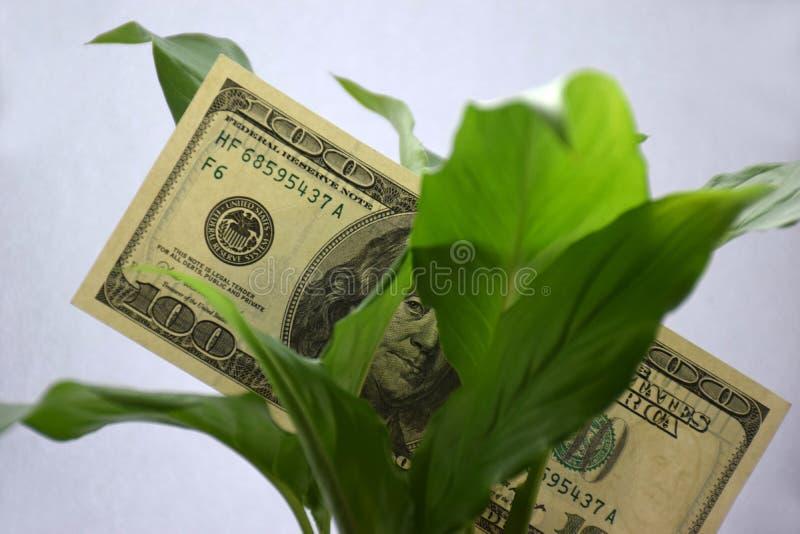 100 dólares en hojas verdes imagen de archivo