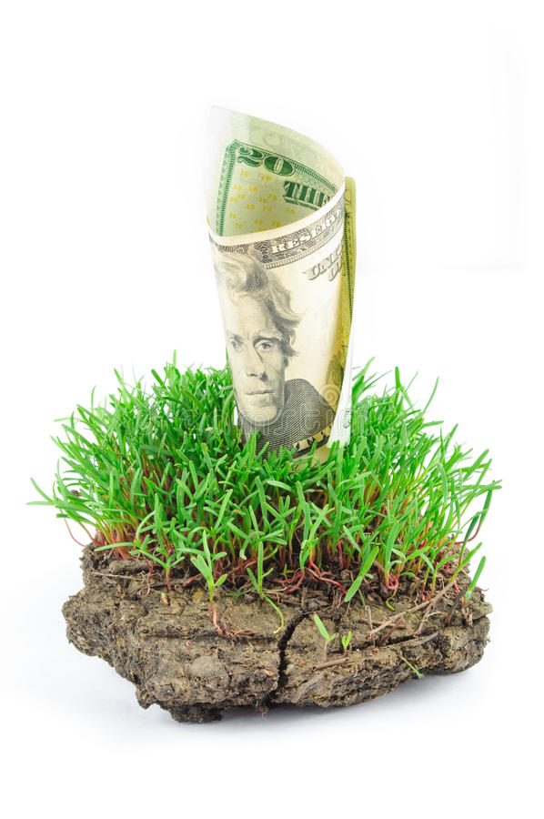 Dólares na grama verde fotografia de stock royalty free