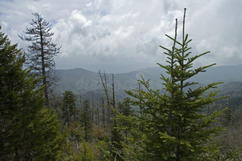 Dôme de Clingmans, montagnes grandes de Smokey photo libre de droits