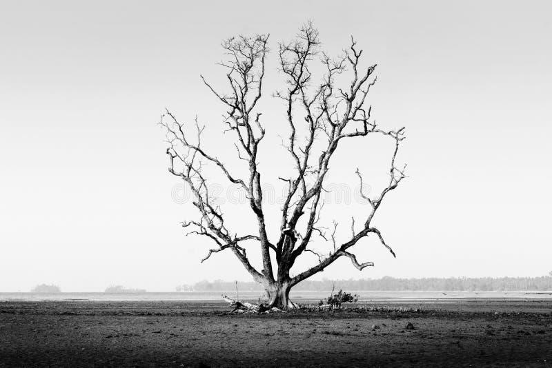 Dö trädet arkivbilder