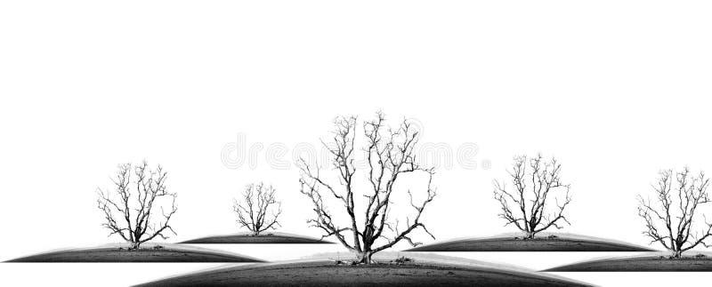 Dö trädet royaltyfria foton