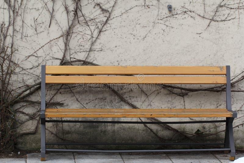 Dö trädet på väggen mellan vila träretro stol in av vintersäsongen på allmänhet parkerar tidigt, det forntida fridsamma läget royaltyfri fotografi